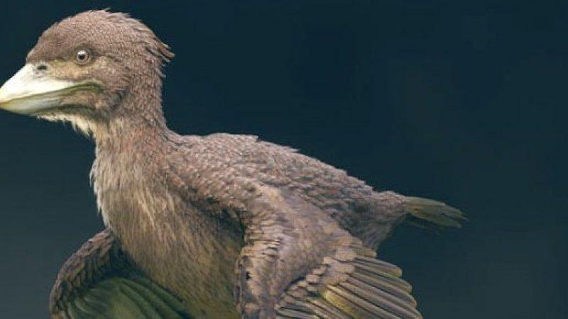Голубь юрского периода. В Японии нашли кости одной из первых в мире птиц