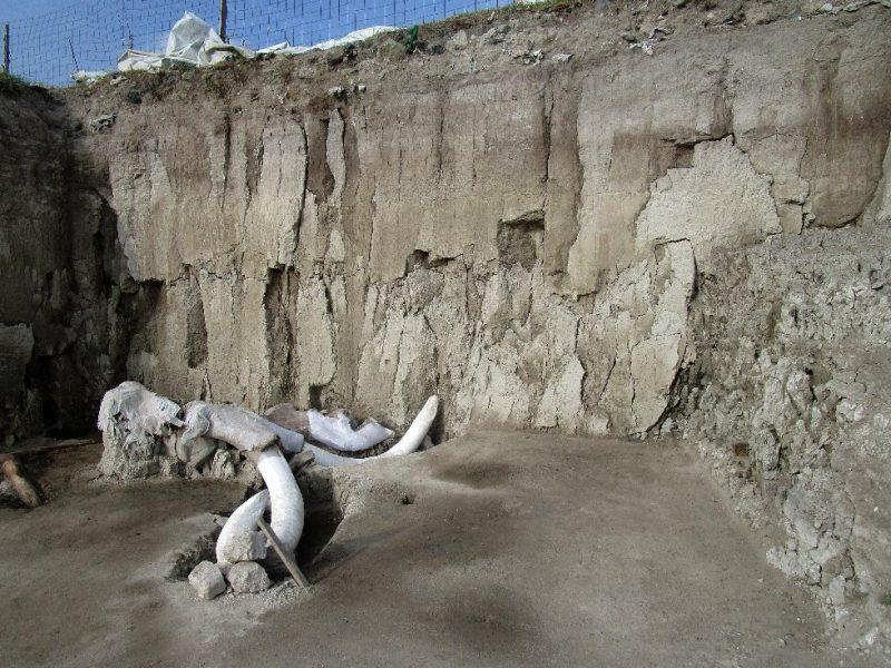 Археологи нашли крупнейшее за всю историю захоронение мамонтов (ФОТО, ВИДЕО)