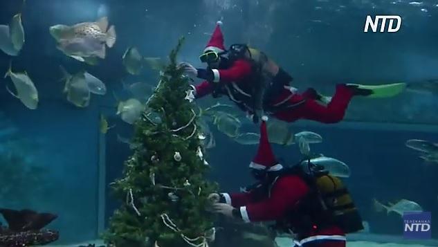 Говорят, им нравится: в Будапештском океанариуме установили елку для акул (ВИДЕО)