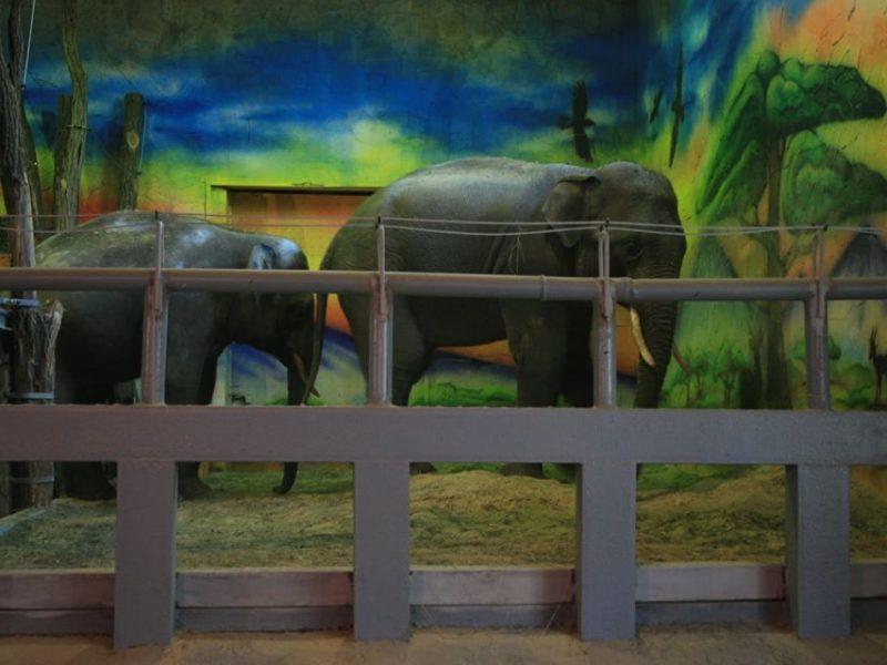 Подружились: в Николаевском зоопарке соединили слонов в одном вольере (ФОТО, ВИДЕО)