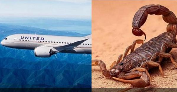 В США женщину на борту самолета ужалил скорпион