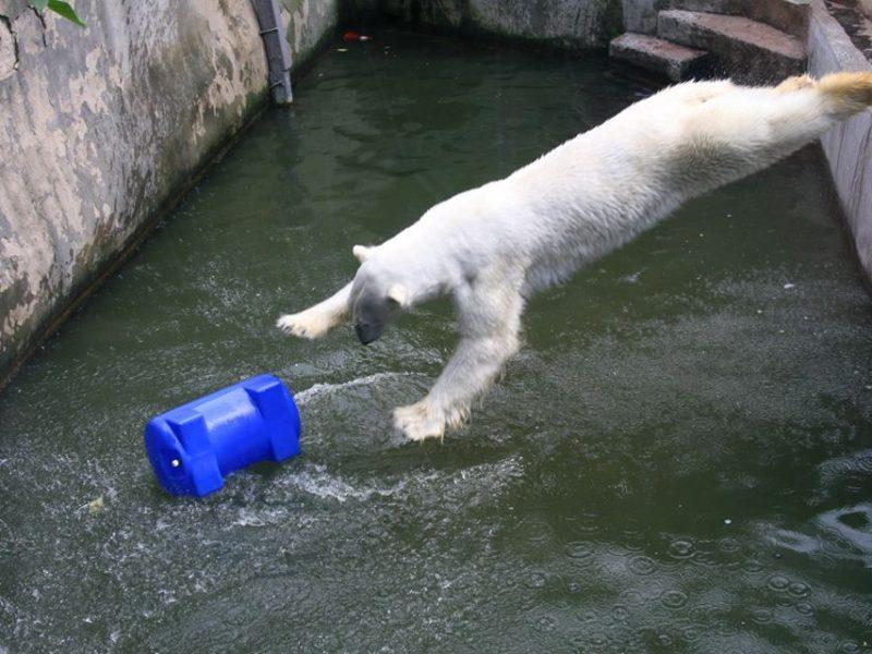 Зверушки любят игрушки: Николаевский зоопарк просит помочь обогатить среду обитания их подопечных (ФОТО)