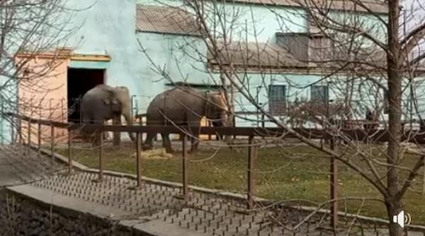 Когда в январе погода, как в марте: в Николаевском зоопарке слоны впервые вышли в летний вольер (ВИДЕО)