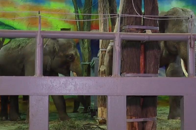 Николаевцам рассказали о характере и повадках слонов, жирафов и снежного барса из Николаевского зоопарка (ВИДЕО)