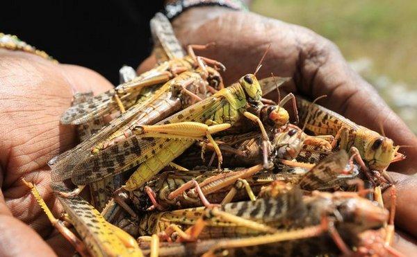 ООН опасается голода из-за невиданного нашествия саранчи в Африке (ФОТО, ВИДЕО)