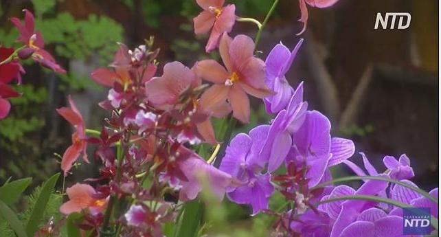 Это просто красиво: в Лондоне проходит фестиваль орхидей (ВИДЕО)