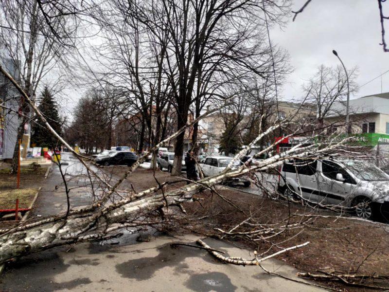 Ветер, ветер, ты могуч: на севере Николаевщины уже начали падать деревья (ФОТО)