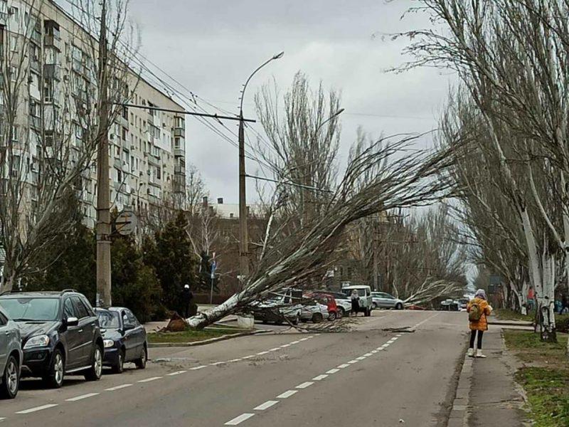 Из-за рухнувшего тополя в Николаеве полностью остановлено движение троллейбусов по 4 маршрутам (ФОТО)