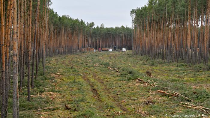 Суд в Германии разрешил вырубить лес ради завода Tesla