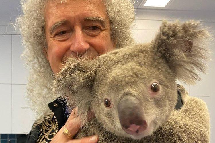 Гитарист Queen устроил концерт для коалы, которую спасли от пожаров в Австралии (ФОТО, ВИДЕО)