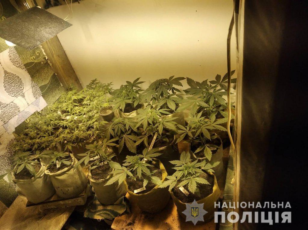 Видео домашнее марихуаны гибрид марихуана