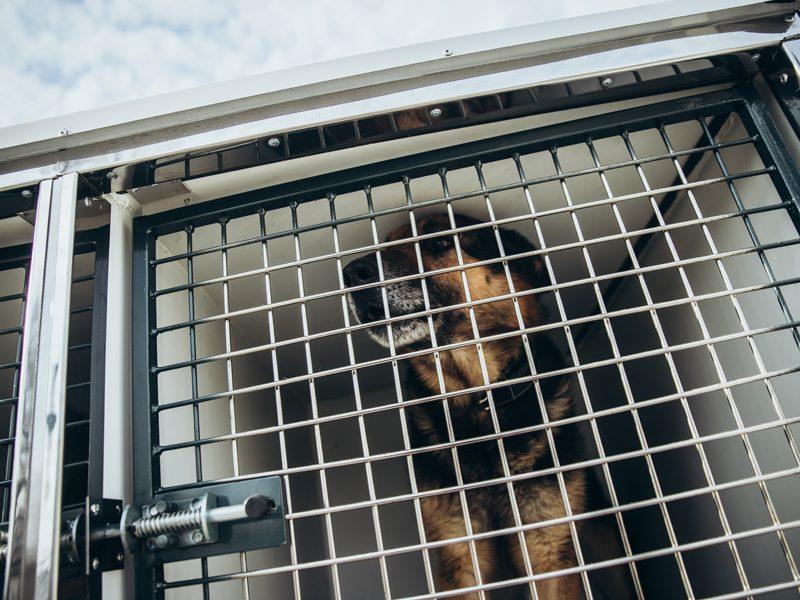 Финский эксперт поделилась с украинскими специалистами опытом подготовки собак-нюхачей для выявления COVID-19
