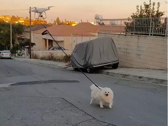 Как выгуливать собак на карантине: хозяин отправляет со шпицем на улицу дрон  (ВИДЕО)