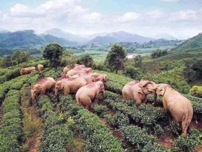 В Индии молния убила стадо слонов