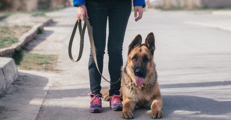 В Испании жертвы гендерного насилия проходят «собачью терапию»