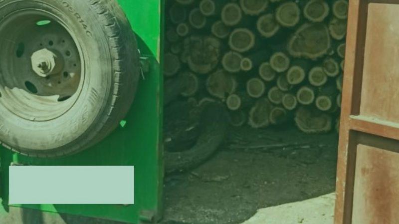 В Арбузинском районе Николаевщины «черные лесорубы» спилили акации
