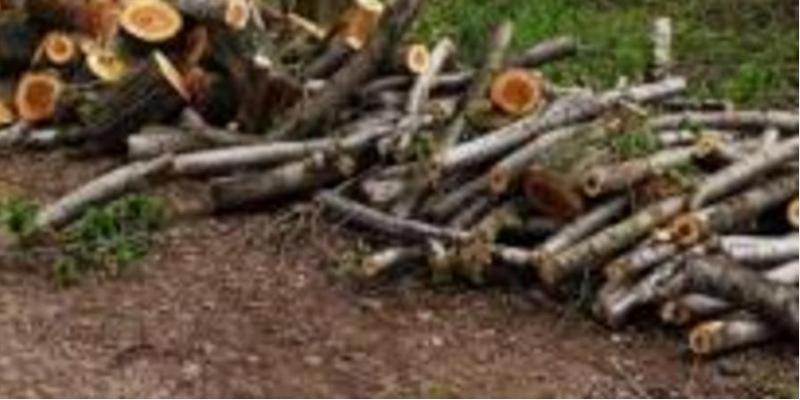 Снова в Арбузинском районе похозяйничали «черные лесорубы» – срубили вязы