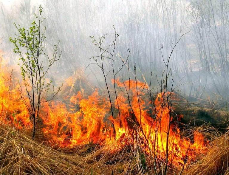 У села Ольшанское сгорело 1,5 га сухостоя