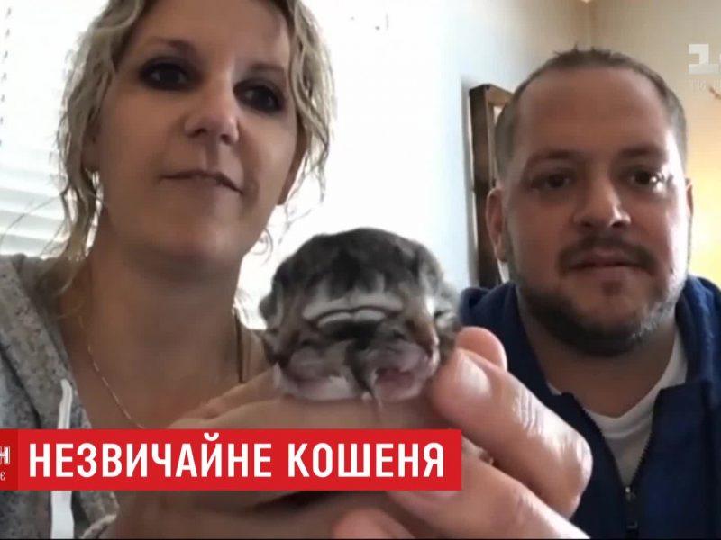 В США родился котенок с двумя мордочками – назвали Бисквитом (ВИДЕО)