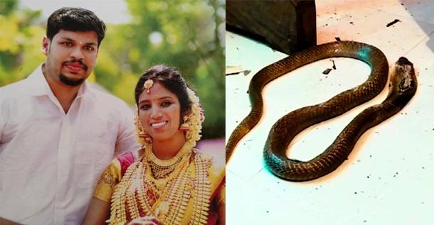 В Индии муж убил спящую жену с помощью кобры