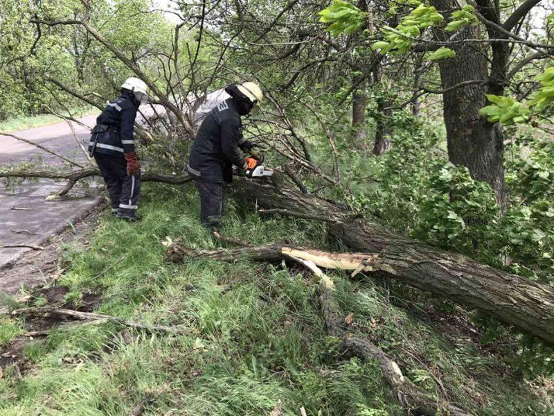 На Николаевщине спасатели оперативно убрали два дерева, упавших на дорогу (ФОТО)