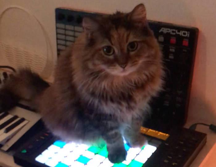 Находка: кошка посидела на MIDI-контроллере и записала эмбиент-альбом (АУДИО)
