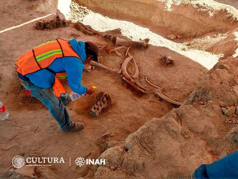 «Их слишком много»: в Мексике нашли кости 60 мамонтов (ВИДЕО)