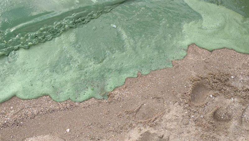В Госэкоинспекции проанализировали, почему пляж «Чайка» в Николаеве покрылся зеленой пеной