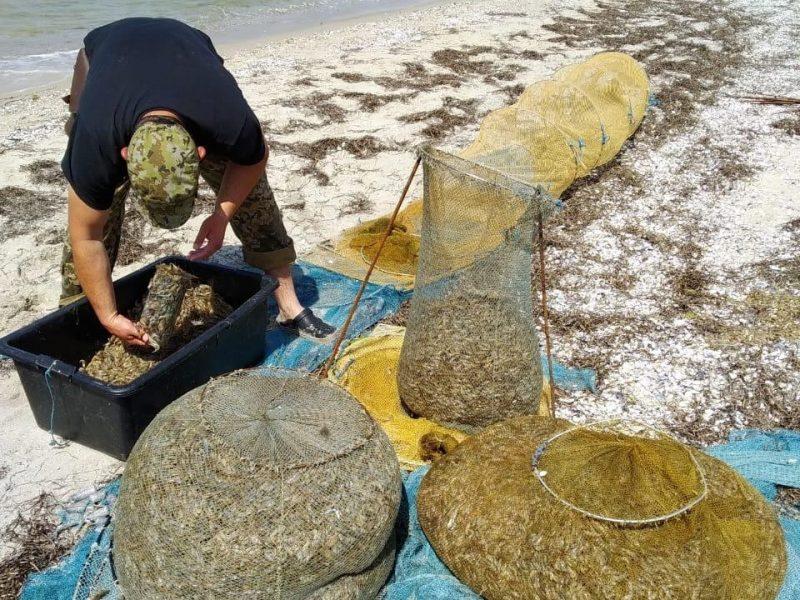 На Николаевщине пограничники вместе с правоохранителями поймали четырех браконьеров с 95 кг креветок (ФОТО)