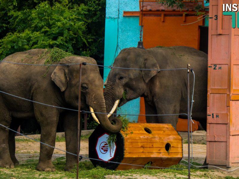 Жить стало веселей: слонам в Николаевском зоопарке подарили большую игрушку (ФОТО, ВИДЕО)