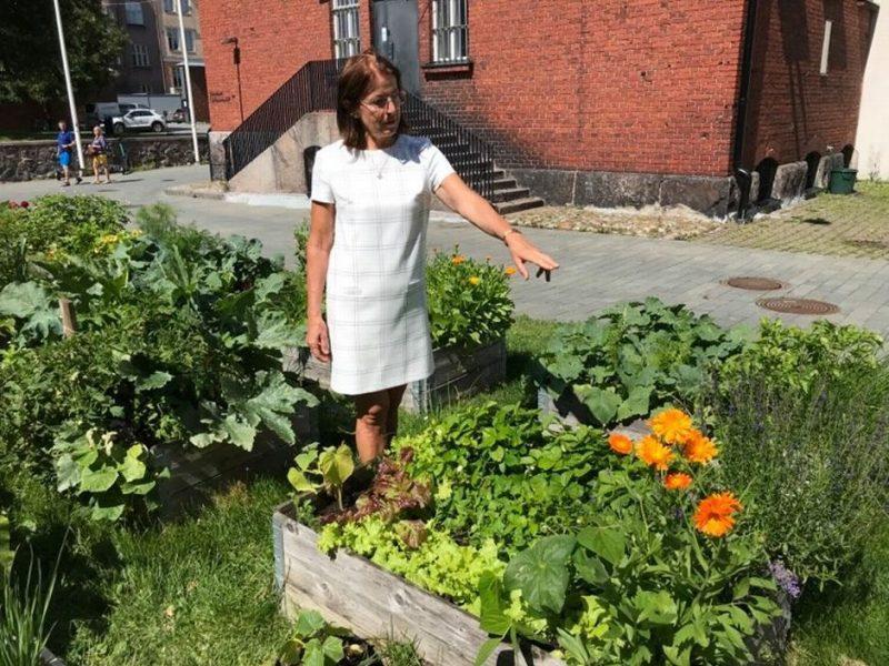 Когда стоит огород городить: в столице Финляндии люди становятся в очередь, чтобы получить право выращивать овощи у дома (ФОТО)