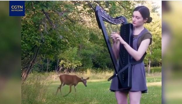 Почти по Диснею: в Канаде олень вышел из леса на мелодию арфы (ВИДЕО)