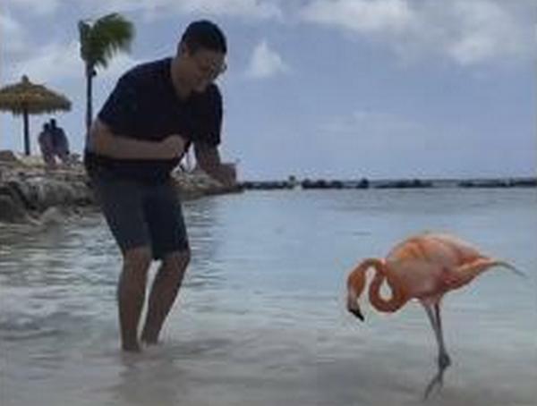 «Розовый фламинго здесь танцевал когда-то»: мужчина станцевал сальсу с необычным партнером на Ренессансе (ВИДЕО)