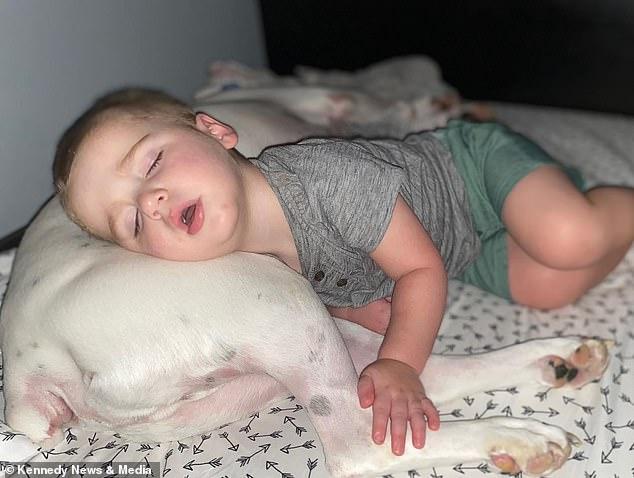 Вот так удобненько будет: двухлетний ребенок каждую ночь перебирается со своей кровати на подстилку пса, чтобы спать рядом с четвероногим другом (ВИДЕО)