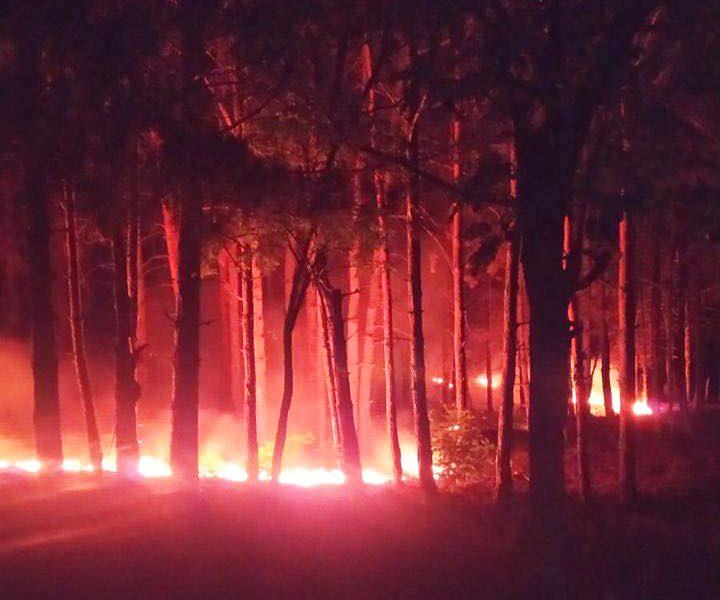 Николаевские спасатели почти 4 часа тушили 1,5 тыс.кв.м хвойной подстилки в Балабановском урочище. Подозревают поджог (ФОТО)