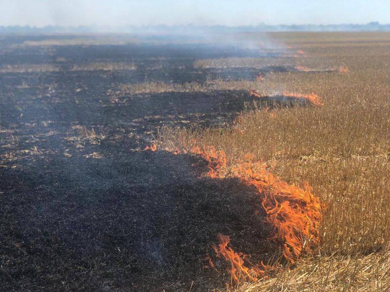 За сутки на Николаевщине спасатели 9 раз тушили пожары на открытых территориях (ВИДЕО)