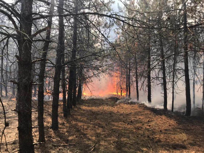 На Николаевщине спасатели несколько часов тушили крупный пожар в Кашперовском урочище (ФОТО)