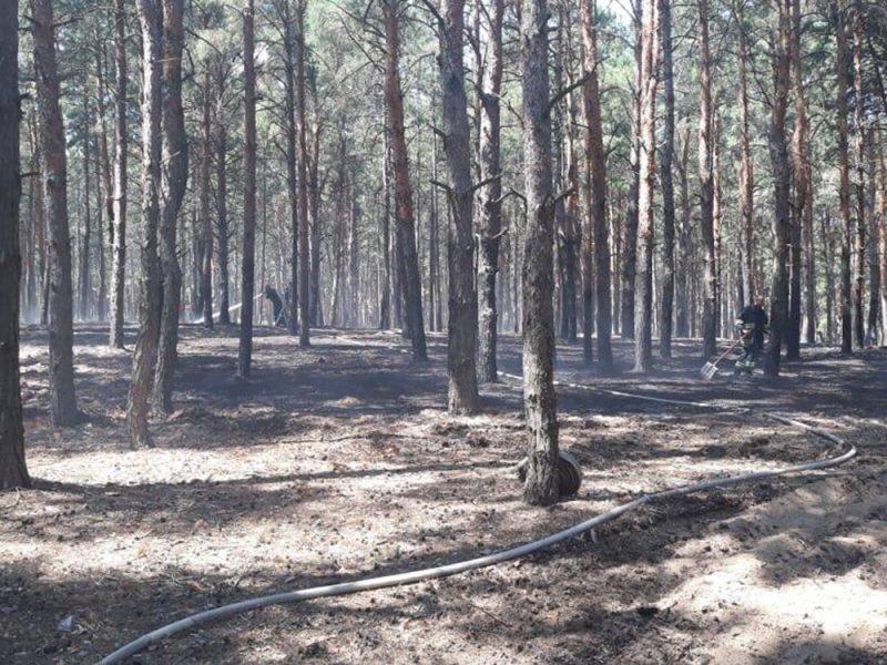 Под Николаевом горел Матвеевский лес (ФОТО)