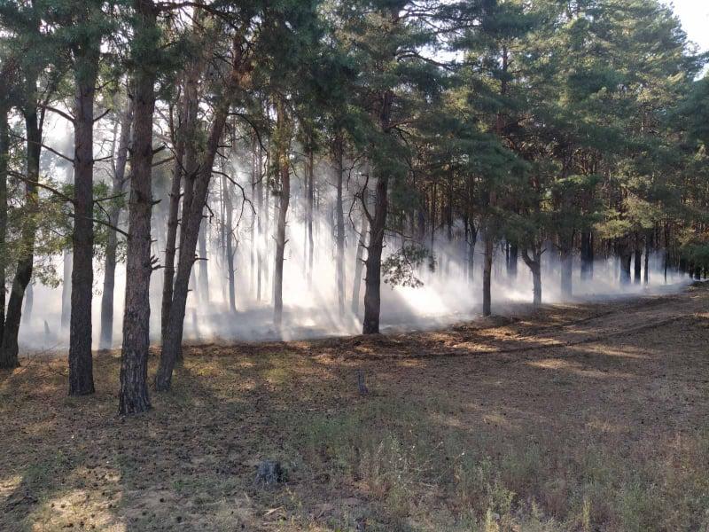 Спасатели тушат второй за день пожар в Матвеевском лесу под Николаевом (ФОТО)