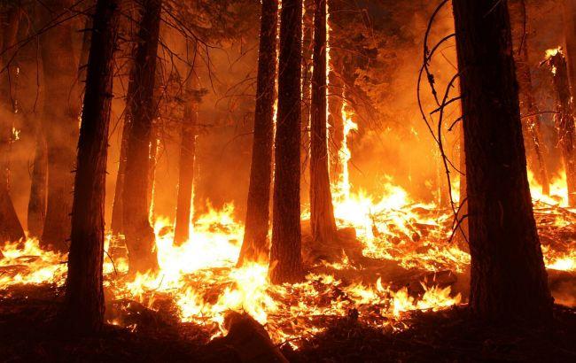 В Сибири горит 3 млн.га тайги, Москва отказалась тушить поожары