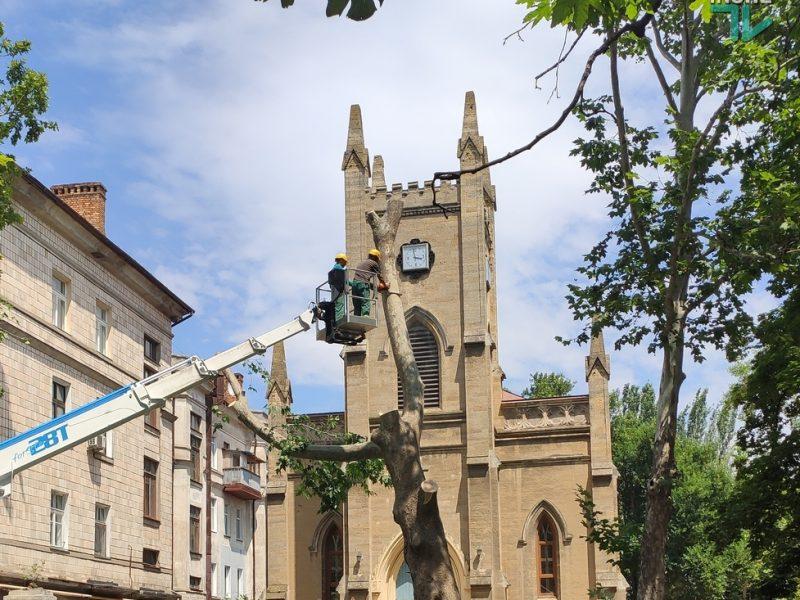 В Николаеве спилили живые многолетние платаны, которые по документам шли как гнилые (ФОТО и ВИДЕО)