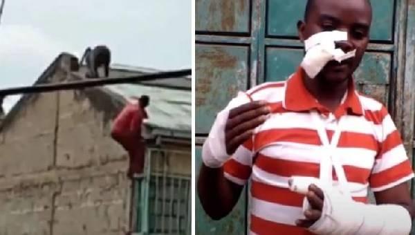 Мужчина полез на крышу прогнать гамадрила, тот сбросил его на землю (ВИДЕО)