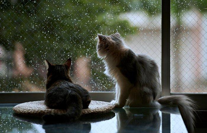 Николаевские синоптики предупреждают о похолодании, дождях и штормовом ветре в воскресенье