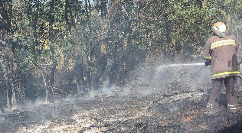 За прошедшие сутки на Николаевщине потушили 5 пожаров сухостоя и пожнивных остатков (ФОТО)