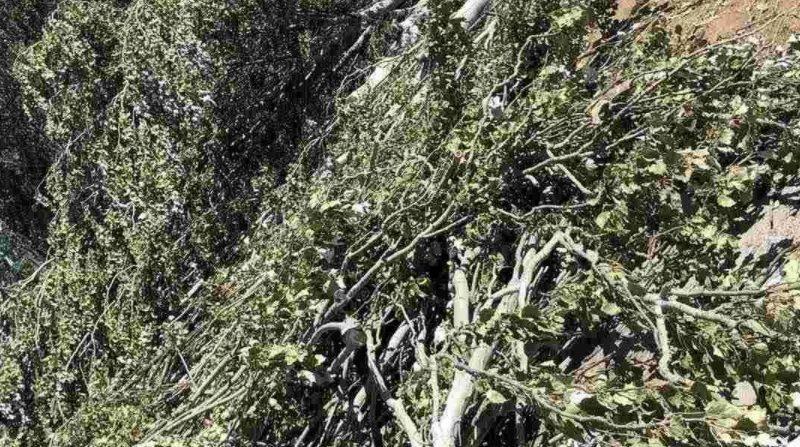 В Терновке спилили 18 тополей – ГЭИ в Николаевской области обратилась в полицию