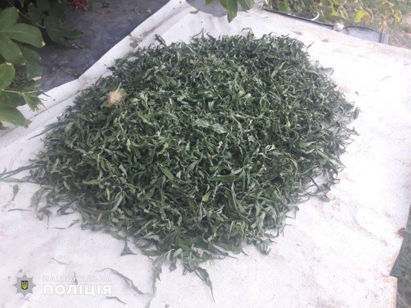 «Вырастил как спасение от зубной боли»: на Николаевщине изъяли 1,5 кг марихуаны и почти 240 кустов конопли (ФОТО)
