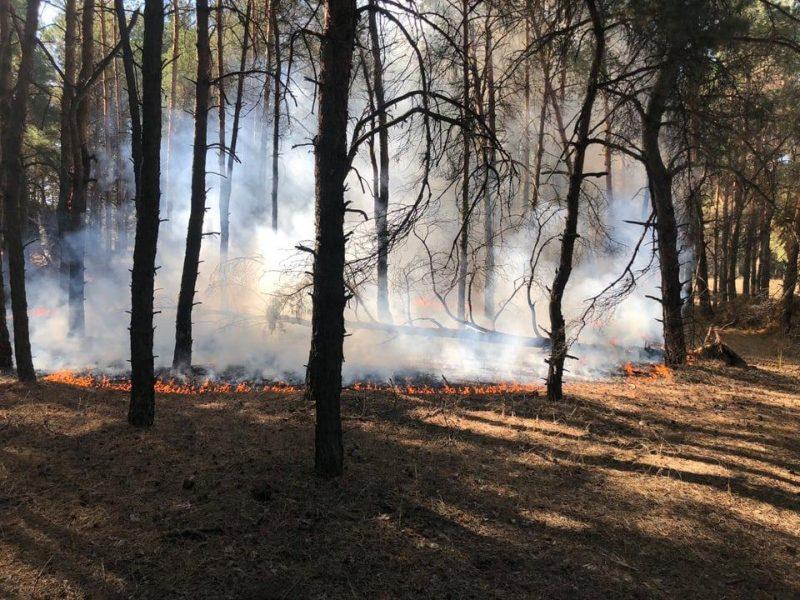 Под Николаевом снова горел лес: дважды подожгли (ФОТО)