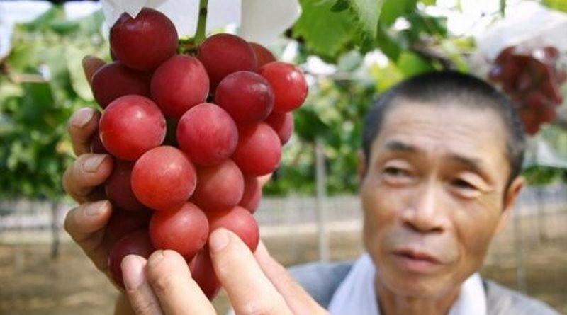 В Японии гроздь винограда купили за $11000