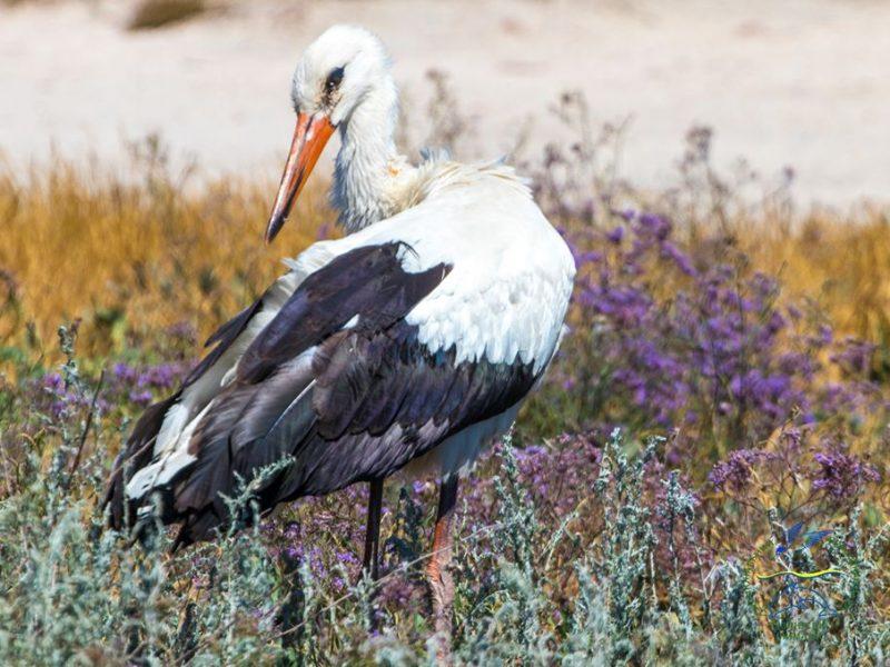 Из 12 аистов выжил один. В Одесской области от града погибло около 300 птиц (ФОТО)