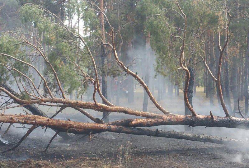 Из-за поджога снова полыхала хвойная подстилка в Балабановском лесу (ФОТО)